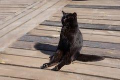 Een zwarte kat geniet van de zon Royalty-vrije Stock Foto's