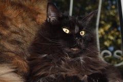 Een zwarte kat zit naast een gekleurde kat door het venster royalty-vrije stock foto