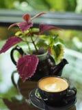 Een zwarte kop van koffie en een pot van installatie Stock Afbeelding