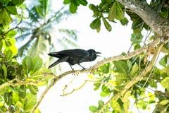 Een zwarte kraai zit in de bomen Stock Fotografie
