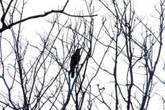 Een zwarte kraaizitting op de dode boom vertakt zich in het bos royalty-vrije stock foto's