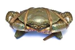 Een zwarte krab Royalty-vrije Stock Afbeelding