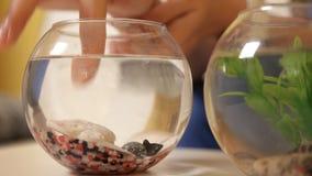 Een zwarte vis zwemt in een klein aquarium terwijl een jong meisje op haar let nave Een vis stock footage