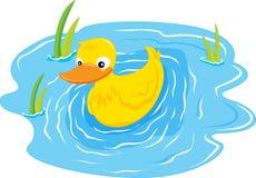 Een zwemmende eend Royalty-vrije Stock Afbeeldingen