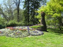 Eend, Bloemen, Groen gras, Zonnige dag, Palic, Subotica stock fotografie
