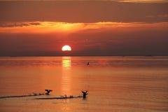 eend die op de achtergrond van zonsopgang opstijgen Royalty-vrije Stock Foto