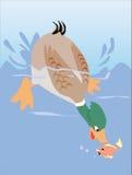Eend die vissen vangt Royalty-vrije Stock Foto