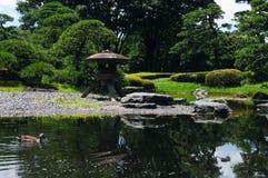 Eend in een pond bij een Japanse tuin Royalty-vrije Stock Foto