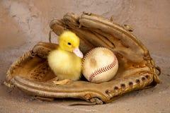 Eend in honkbalhandschoen Stock Foto's