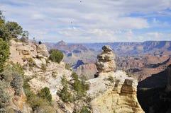Eend op een Rots op Grand Canyon -Zuidenrand royalty-vrije stock foto's
