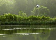 Eend in Water Royalty-vrije Stock Foto's