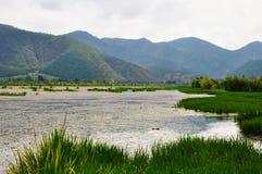 Eend in Weide met Rich Water Stock Afbeelding