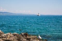Eend, Zeemeeuw en Waterhoen op Rotsen op Meer Leman met Stoomboot stock afbeelding