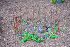 Eendbroedsel haar ei in nest Royalty-vrije Stock Foto's