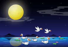 Eenden bij de vijver in een maanlichtlandschap Royalty-vrije Stock Afbeeldingen