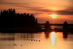 Eenden bij Zonsondergang Stock Afbeelding