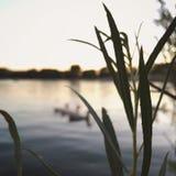 Eenden bij Zonsondergang Stock Foto's