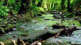 Eenden in de bosstroom stock videobeelden