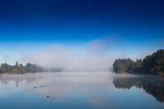 Eenden in de mist Royalty-vrije Stock Foto