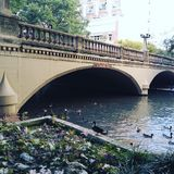 eenden in de rivier Royalty-vrije Stock Fotografie