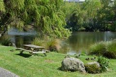 Eenden die naast een vijver op het gras hurken royalty-vrije stock afbeelding