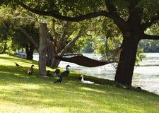 Eenden die op een Riverbank nestelen Royalty-vrije Stock Fotografie