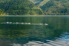 Eenden in een meer in het midden van een bergbos royalty-vrije stock foto's