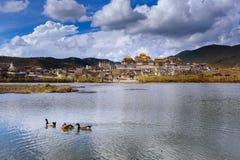 Eenden in het meer in Zhongshan Lin Temple Royalty-vrije Stock Foto's