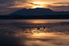 Eenden in het water bij zonsopgang stock foto