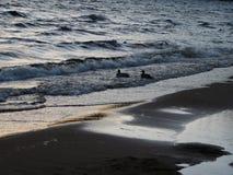 Eenden op een stormachtige dag stock fotografie