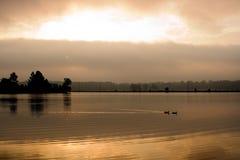 Eenden op gouden meer Stock Afbeeldingen