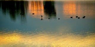 Eenden op het water Royalty-vrije Stock Foto's