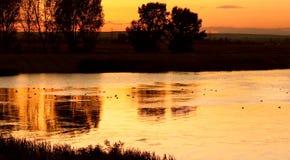 Eenden op kalm meer bij zonsondergang Stock Afbeelding