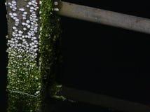 Eendenmossel Behandelde Ladder Royalty-vrije Stock Fotografie