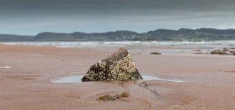Eendenmosselen op een rots royalty-vrije stock afbeelding