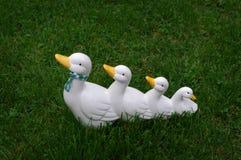 Eendfamilie stock afbeelding