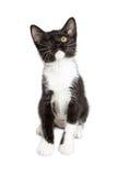 Eenogig Katje op Witte Achtergrond Royalty-vrije Stock Foto