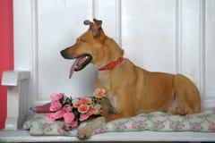 Eenogige hond Royalty-vrije Stock Foto