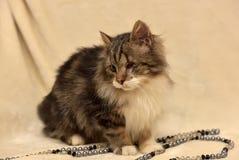 Eenogige, pluizige kat Stock Foto's