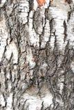 Eenvoudig fotopatroon als achtergrond van het fragment van de boombark stock foto