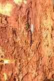 Eenvoudig fotopatroon als achtergrond van het fragment van de boombark royalty-vrije stock afbeelding