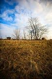 Eenvoudig landschap met detail van droog gras Royalty-vrije Stock Afbeelding