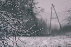 eenvoudig plattelandslandschap in Letland met gebieden en bomen onder sneeuw - de uitstekende retro film ziet eruit stock foto