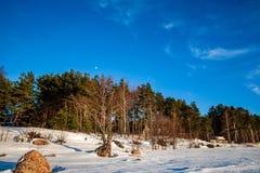 eenvoudig plattelandslandschap in Letland met gebieden en bomen und royalty-vrije stock fotografie