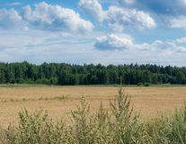 Eenvoudig schilderachtig de zomerlandschap - een blauwe hemel en witte wolken over een groen bos stock foto
