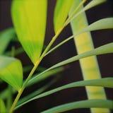 Eenvoudige bladeren Stock Foto