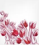 Eenvoudige de plons kleurrijke schets van de tulpen vectorkaart vector illustratie