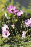 Eenvoudige en gevoelige bloem bij zonsopgang Stock Foto