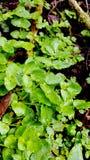 Eenvoudige groene bladeren stock foto's