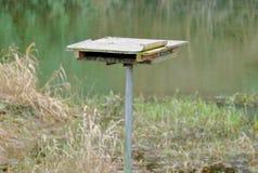 Eenvoudige mens gemaakt tot toppositie voor wilde vogels stock foto's